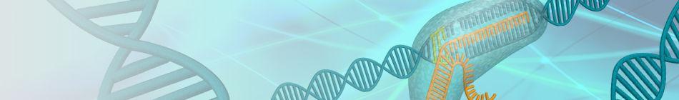 CRISPR/Cas9 Nuclease System - Banner