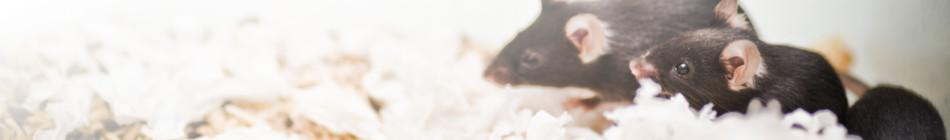 Case Studies on Mouse Models - Banner