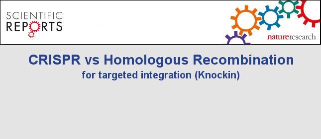 CRISPR/Cas9-mediated Knockin study on 128 loci