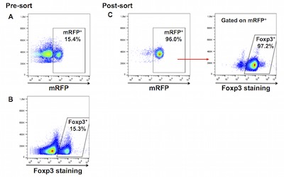 hGITR+Foxp3 ICP model validation 2