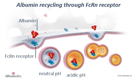 Albumin recycling