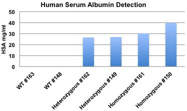 Human Serum Albumin detection in HSA Knockin mice
