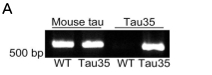 Figure 1a - Tau35 mice