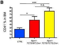Figure 1b - NPM1 mice