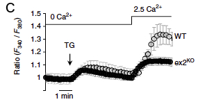 Figure 1c - PLA2G6 KO mice