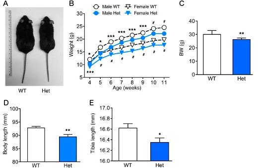 Figure 1 - p85R649W mice