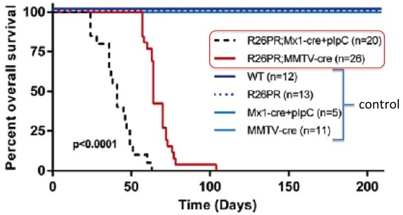 Mimicked lymphoblastic leukemia in mice