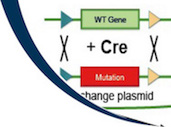 RMCE: Recombinase-Mediated Cassette Exchange