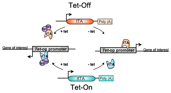 TET-Off-ON-System